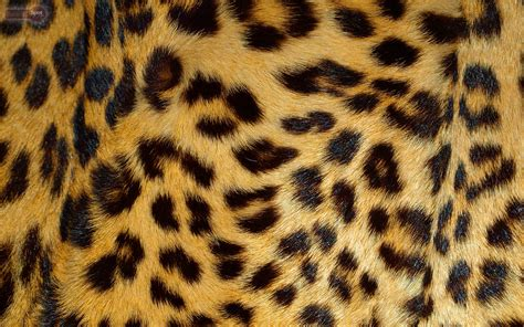 jaguar print wallpaper leopard wallpapers animal spot