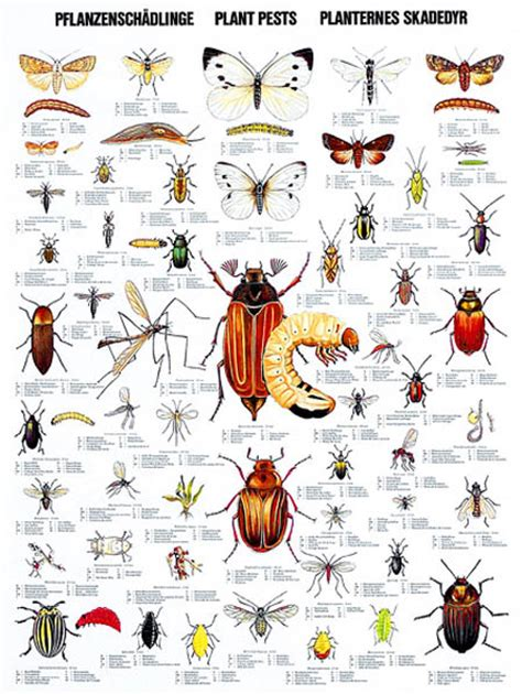 house and garden pest images about garden pests on gardens raising