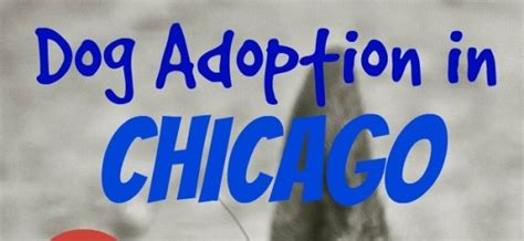 puppy adoption chicago your guide to adoption in chicago dogvills