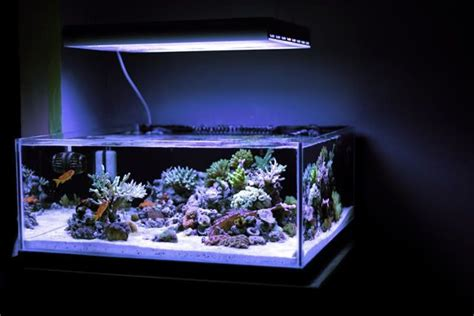 Aquascaping Tank Minimalist Aquascaping Page 37 Reef Central Online