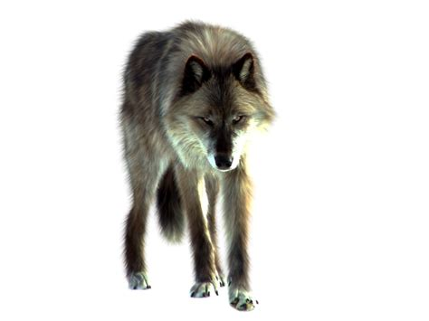 9 best images about wolf png wolf by itsdura on deviantart
