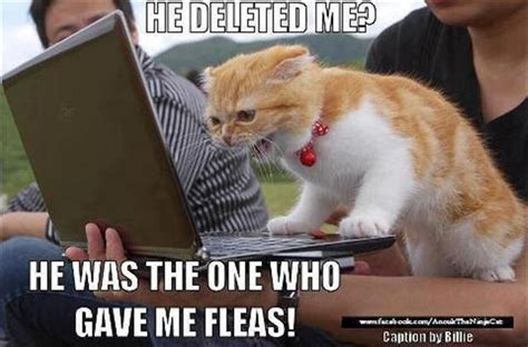 Lol Cat Meme - lolcats meme dump a day