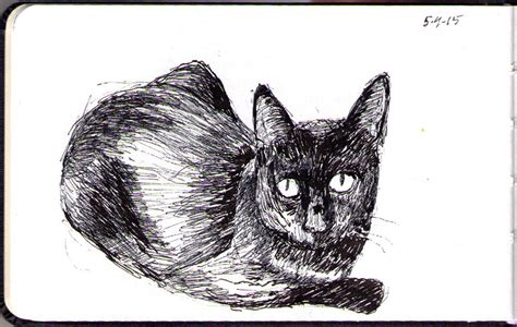a piglet called truffle 0857637738 drawing of a cat called truffles in ballpoint pen one drawing daily