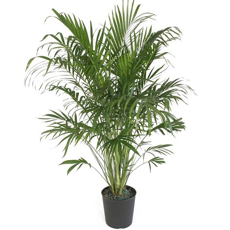 artificial house plants 100 house plants safe for cats 6 common indoor plants that are highly toxic