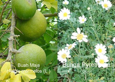 Dan Gambar Bio 39 tanaman potensial sebagai bahan pestisida nabati