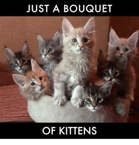 Wedding Bouquet Meme 25 best memes about bouquet bouquet memes