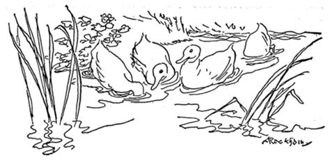 coloring pages ducks in a pond ducks play together in pond coloring page supercoloring com
