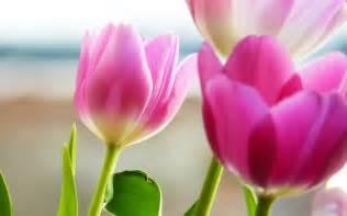Hd Images Of Flowers Flowers Hd Wallpape Flower Hd Wallpaper Amazing Wallpapers