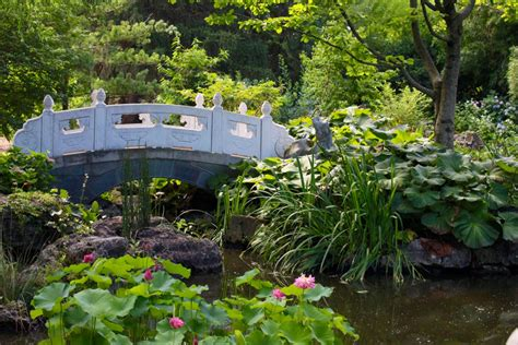 Missouri Botanical Garden And Sure Stars Shining Missouri Botanical Garden Press