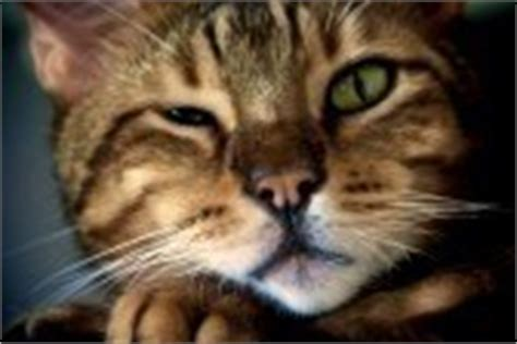 squinting one eye my cat is squinting one eye f f info 2016
