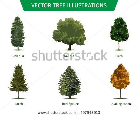 types of cedar trees different tree sorts names