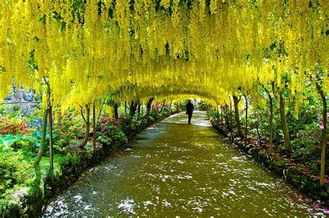 Amo Gardens by Los 17 T 250 Neles De Arboles Hermosos Y Bellos Mundo
