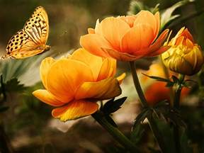 Awesome Flower Pictures - colorful butterfly hd wallpapers real amp artistic