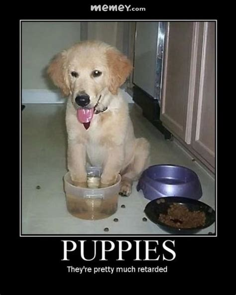 puppy memes funny puppy pictures memey com