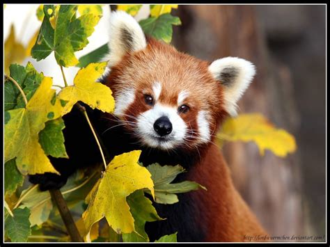 la fauna pictures looks can be deceiving flora and fauna wallpaper 18586630 fanpop