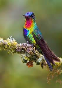 hummingbird colors top 10 colorful birds around the world most