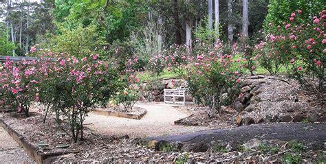 tamborine mountain botanic gardens garden tamborine mountain botanic gardens
