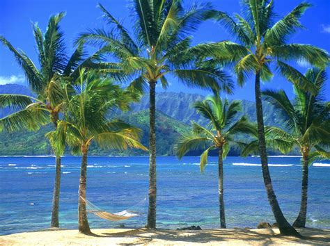 palm tree wallpaper palm tree background wallpapers win10 themes