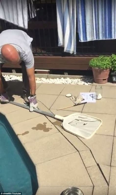 removing a pool from backyard dad removes spider from pool in newcastle express digest
