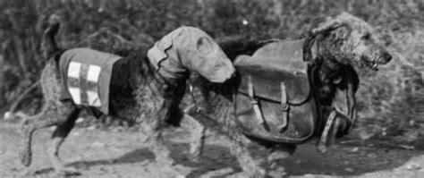 war dogs 2 dogs at world war 2 ww2 gravestone