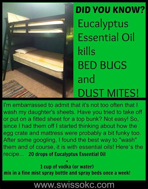 essential oils bed bugs 25 best ideas about bed bugs on pinterest bed bugs