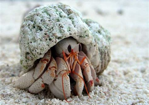 hermit crab heat l helpful tips to care for hermit crab reptiles and