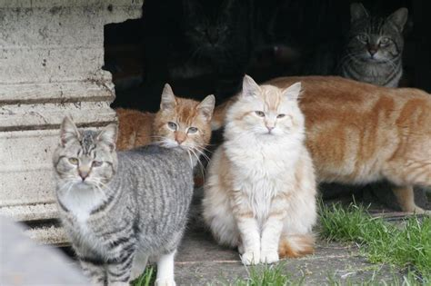 130 Cats Is Way Many by New York City S Feral Cats And You The Brian Lehrer
