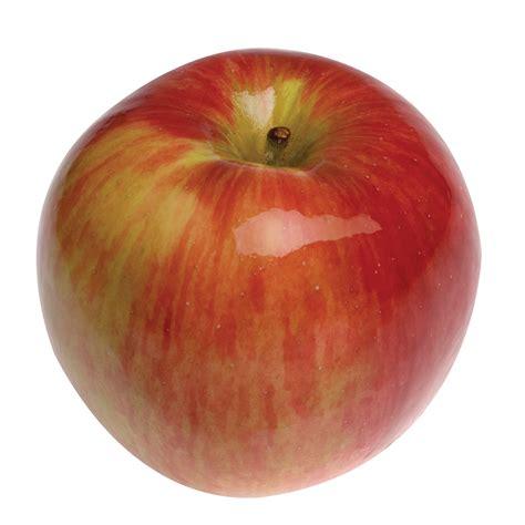 apple australia malus domestica apple johnathon blerick trees buy online