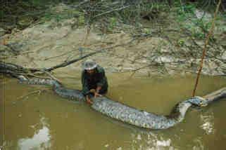 criptosito sucuriju serpenti giganti