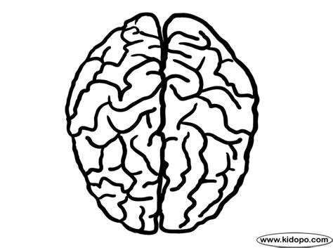 Brain Coloring Page Brain Top View Coloring Page by Brain Coloring Page