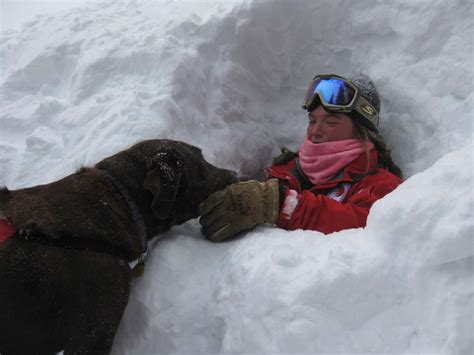 puppies and more rescue some dogs rescue that got stuck and covered by the snow from the avalanche but