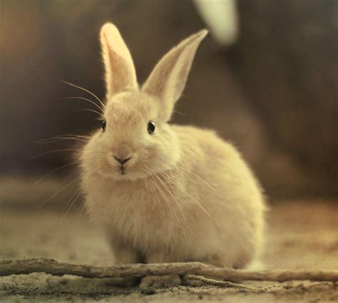 rabbit bunny bunny bunny rabbits photo 30657035 fanpop