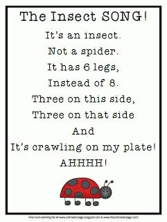 all about that baby sheep stuff lyrics it s an insect not a spider school stuff