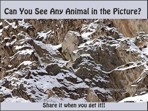 Can See What You Search On Picture Riddle Find The Animal In Mountains