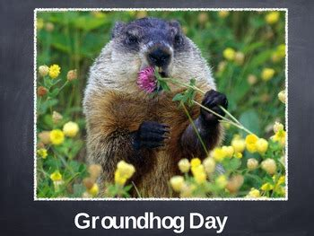 groundhog day australia groundhog day powerpoint by tireless teachers