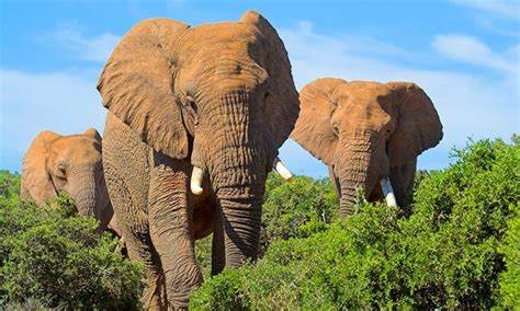 south africa tour with airfare in groupon getaways