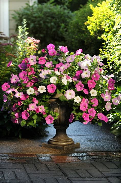 Easy Garden Flowers 17 Best Images About Easy Wave Petunias On Neon Plugs And White Blue