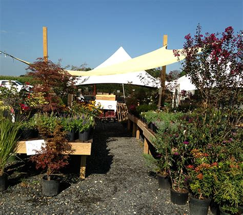 garden centers in maryland new plants and flowers have
