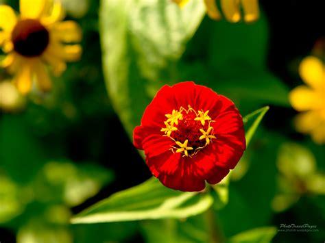 worlds beautiful    beautiful flowers