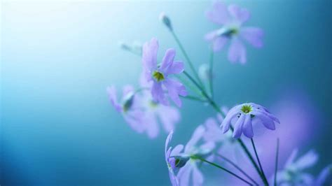 flowers that bloom at beautiful flowers wallpapers new wallpapers beautiful flowers 187 hd wallpapers