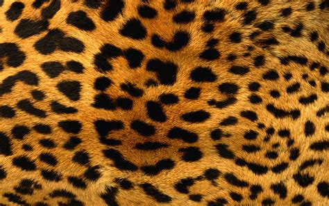 printed wallpaper the leopard print wallpaper leopard print iphone