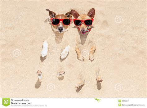 Fan Sanden dogs buried in sand stock photo image 54850241