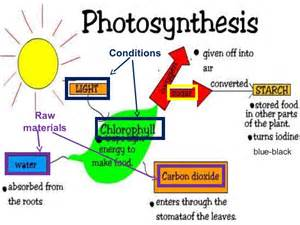 Energy Of Light Equation Lower Secondary Photosynthesis