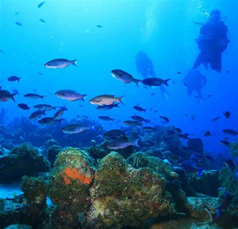 Best Diving In The Caribbean by Best Diving In The Caribbean Lonely Planet