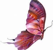 Brillo Mariposas Animadas Picture Evelnatt Wallpapers Pictures