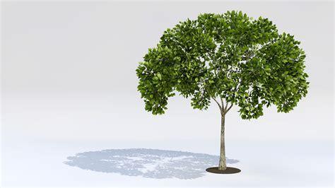 tree 3d model tree 3d models