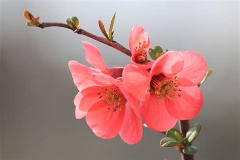 Fleurs De Printemps by Photo Gratuite Fleur Printemps Floraison En Mars