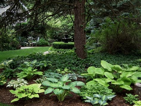1000 ideas about hosta gardens on pinterest shade