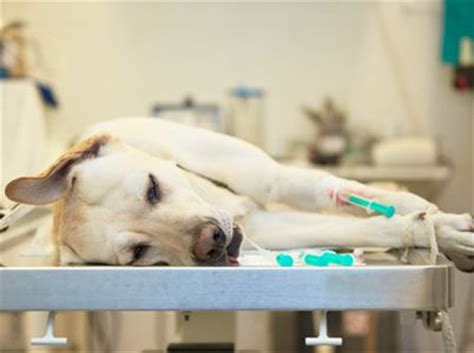 ab wann hundesteuer hunde op versicherungen im vergleich