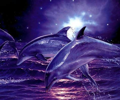 wallpaper for laptop zedge dolphin zedge wallpapers pinterest dolphins
